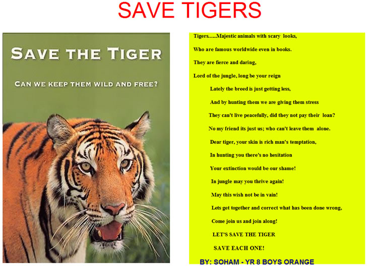 Soham's poem about the tiger and the threat oftigers becoming extinct